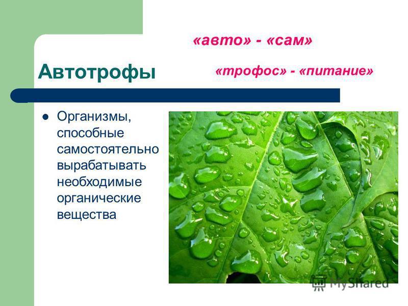 Автотрофы Организмы, способные самостоятельно вырабатывать необходимые органические вещества «авто» - «сам» «трофос» - «питание»