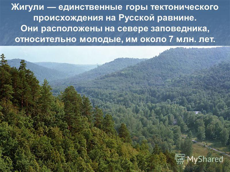 , Жигули единственные горы тектонического происхождения на Русской равнине. Они расположены на севере заповедника, относительно молодые, им около 7 млн. лет.