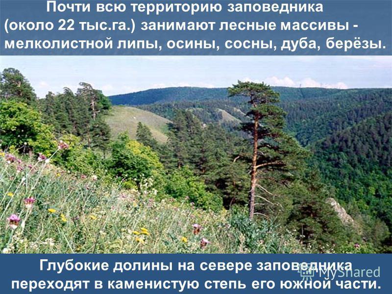Глубокие долины на севере заповедника переходят в каменистую степь его южной части. Почти всю территорию заповедника (около 22 тыс.га.) занимают лесные массивы - мелколистной липы, осины, сосны, дуба, берёзы.