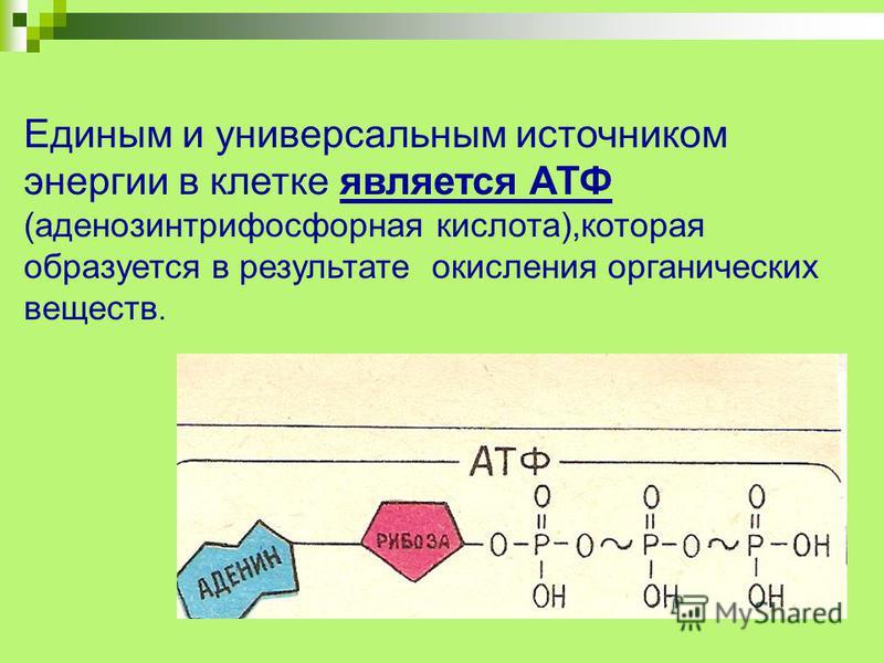Единым и универсальным источником энергии в клетке является АТФ (аденозинтрифосфорная кислота),которая образуется в результате окисления органических веществ.