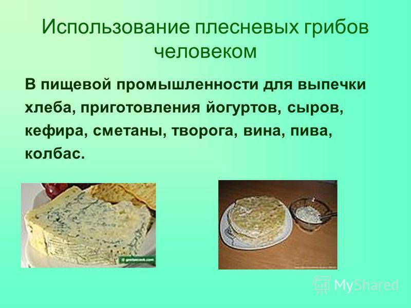Использование плесневых грибов человеком В пищевой промышленности для выпечки хлеба, приготовления йогуртов, сыров, кефира, сметаны, творога, вина, пива, колбас.