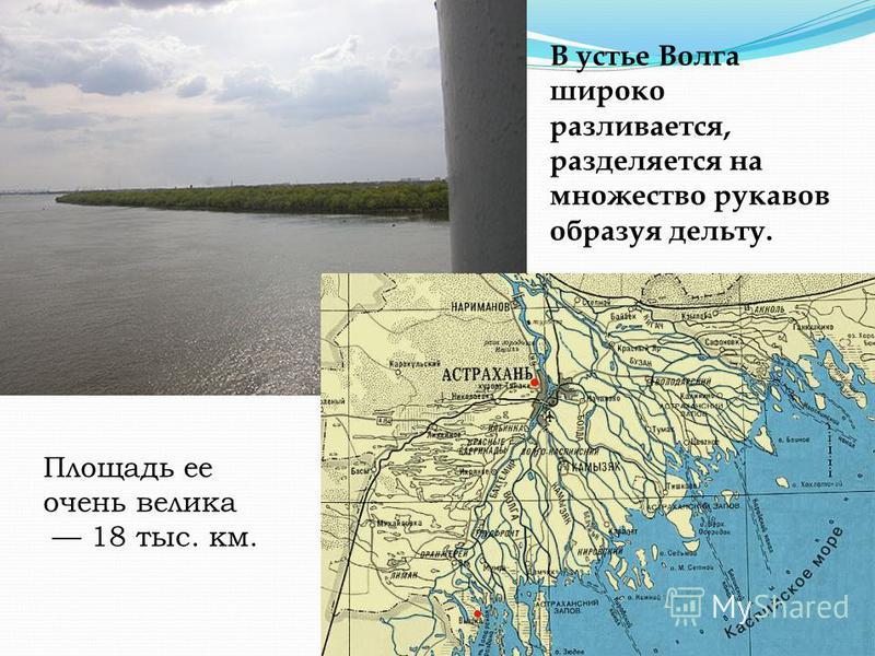 В устье Волга широко разливается, разделяется на множество рукавов образуя дельту. Площадь ее очень велика 18 тыс. км.
