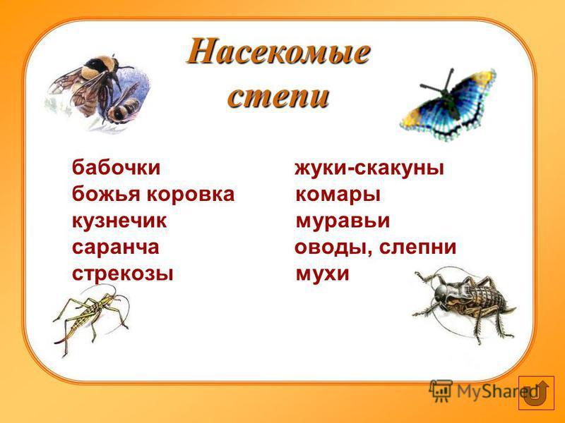 Насекомые степи бабочки жуки-скакуны божья коровка комары кузнечик муравьи саранча оводы, слепни стрекозы мухи