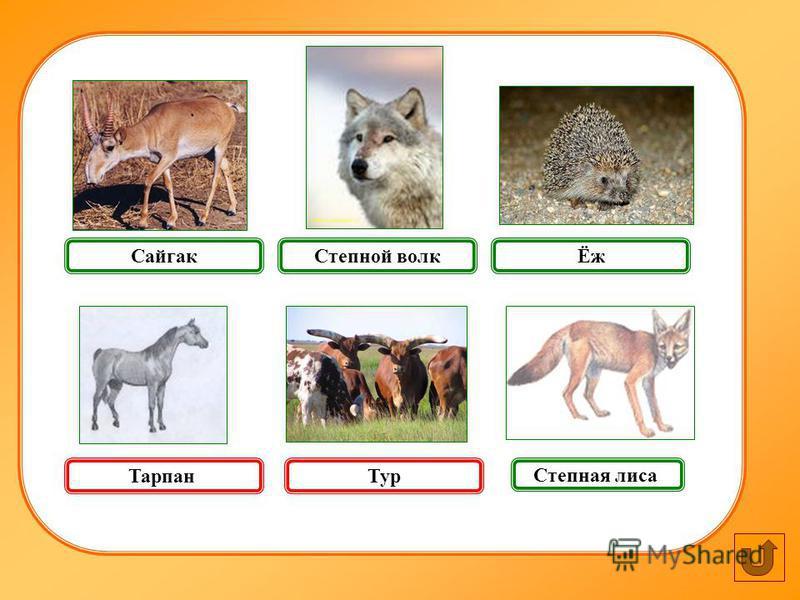 Ёж Тур Степная лиса Сайгак Степной волк Тарпан