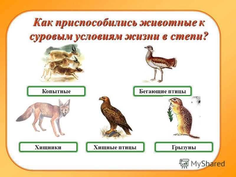 Хищники Грызуны Копытные Как приспособились животные к суровым условиям жизни в степи? Бегающие птицы Хищные птицы