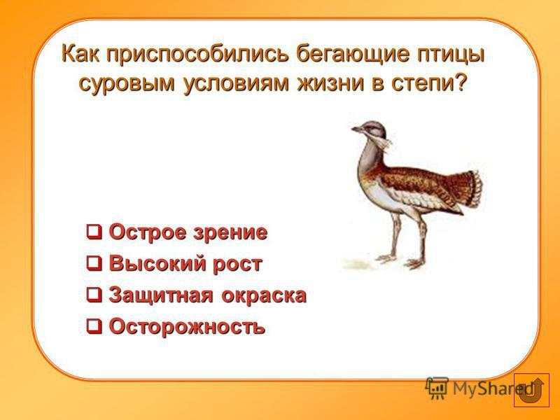 Как приспособились бегающие птицы суровым условиям жизни в степи? Острое зрение Острое зрение Высокий рост Высокий рост Защитная окраска Защитная окраска Осторожность Осторожность