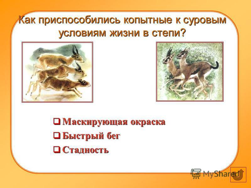 Как приспособились копытные к суровым условиям жизни в степи? Маскирующая окраска Маскирующая окраска Быстрый бег Быстрый бег Стадность Стадность