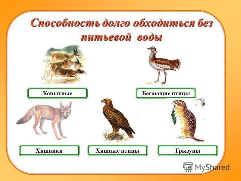 Хищники Грызуны Копытные Способность долго обходиться без питьевой воды Бегающие птицы Хищные птицы