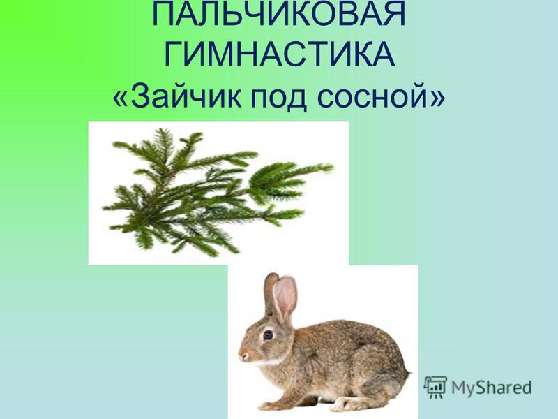 ПАЛЬЧИКОВАЯ ГИМНАСТИКА «Зайчик под сосной»