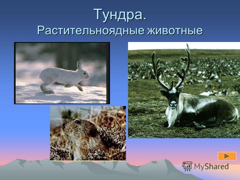 Размещение животных подчиняется закону широтной зональности и высотной поясности.