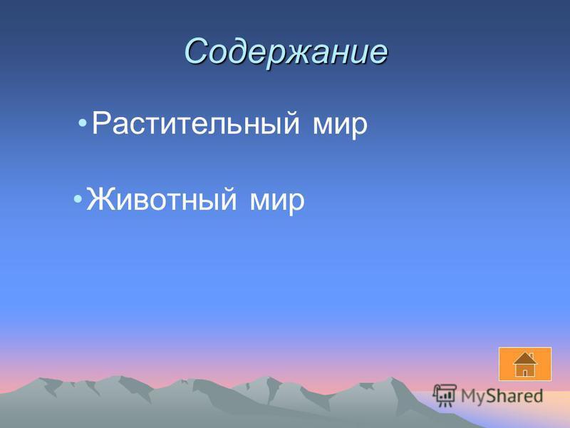 Растительный и животный мир России Презентация по географии Герасимова Саши 8 в класс