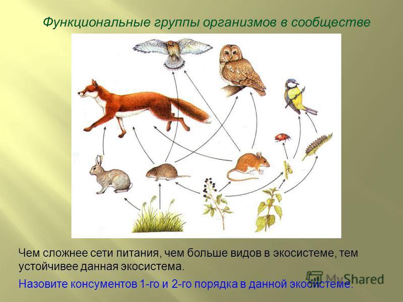 Функциональные группы организмов в сообществе Чем сложнее сети питания, чем больше видов в экосистеме, тем устойчивее данная экосистема. Назовите консументов 1-го и 2-го порядка в данной экосистеме.