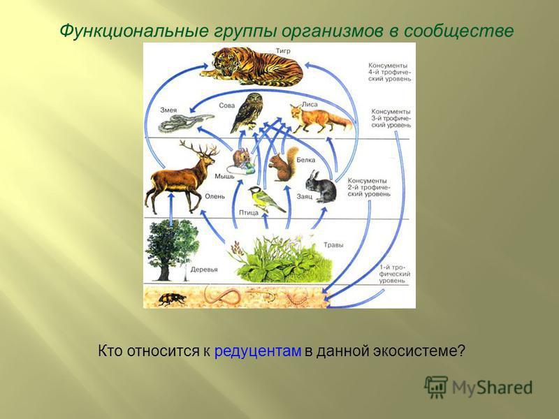 Функциональные группы организмов в сообществе Кто относится к редуцентам в данной экосистеме?