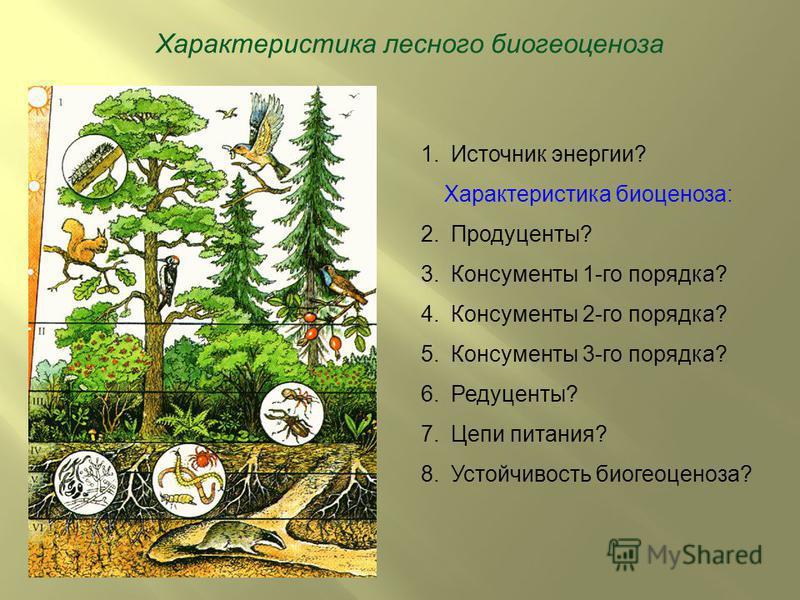 Характеристика лесного биогеоценоза 1. Источник энергии? Характеристика биоценоза: 2.Продуценты? 3. Консументы 1-го порядка? 4. Консументы 2-го порядка? 5. Консументы 3-го порядка? 6.Редуценты? 7. Цепи питания? 8. Устойчивость биогеоценоза?