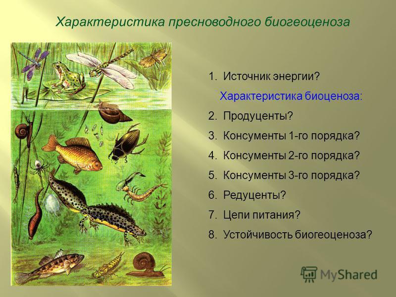 Характеристика пресноводного биогеоценоза 1. Источник энергии? Характеристика биоценоза: 2.Продуценты? 3. Консументы 1-го порядка? 4. Консументы 2-го порядка? 5. Консументы 3-го порядка? 6.Редуценты? 7. Цепи питания? 8. Устойчивость биогеоценоза?