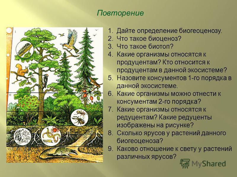 Повторение 1. Дайте определение биогеоценозу. 2. Что такое биоценоз? 3. Что такое биотоп? 4. Какие организмы относятся к продуцентам? Кто относится к продуцентам в данной экосистеме? 5. Назовите консументов 1-го порядка в данной экосистеме. 6. Какие