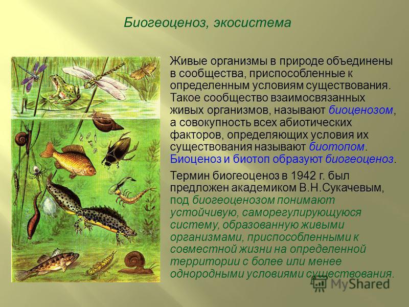 Биогеоценоз, экосистема Живые организмы в природе объединены в сообщества, приспособленные к определенным условиям существования. Такое сообщество взаимосвязанных живых организмов, называют биоценозом, а совокупность всех абиотических факторов, опред