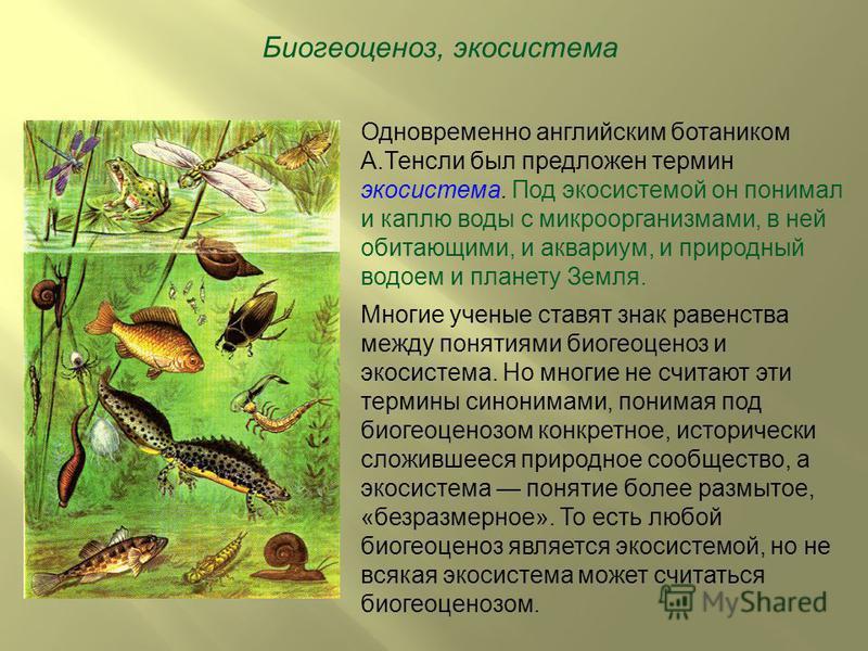 Биогеоценоз, экосистема Одновременно английским ботаником А.Тенсли был предложен термин экосистема. Под экосистемой он понимал и каплю воды с микроорганизмами, в ней обитающими, и аквариум, и природный водоем и планету Земля. Многие ученые ставят зна
