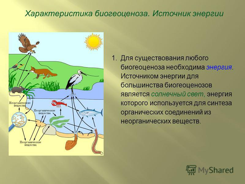 Характеристика биогеоценоза. Источник энергии 1. Для существования любого биогеоценоза необходима энергия. Источником энергии для большинства биогеоценозов является солнечный свет, энергия которого используется для синтеза органических соединений из