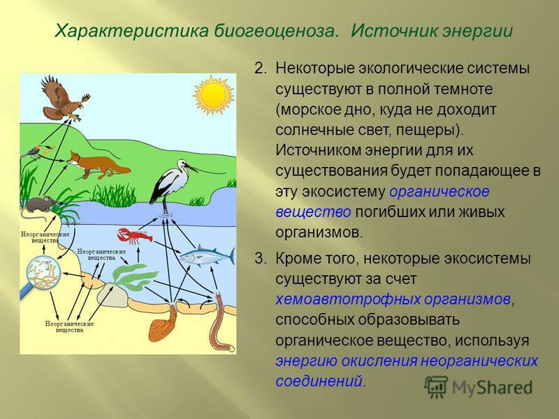 2. Некоторые экологические системы существуют в полной темноте (морское дно, куда не доходит солнечные свет, пещеры). Источником энергии для их существования будет попадающее в эту экосистему органическое вещество погибших или живых организмов. 3. Кр