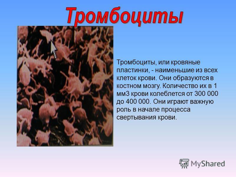 Тромбоциты, или кровяные пластинки, - наименьшие из всех клеток крови. Они образуются в костном мозгу. Количество их в 1 мм 3 крови колеблется от 300 000 до 400 000. Они играют важную роль в начале процесса свертывания крови.