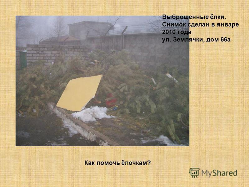 Выброшенные ёлки. Снимок сделан в январе 2010 года ул. Землячки, дом 66 а Как помочь ёлочкам?