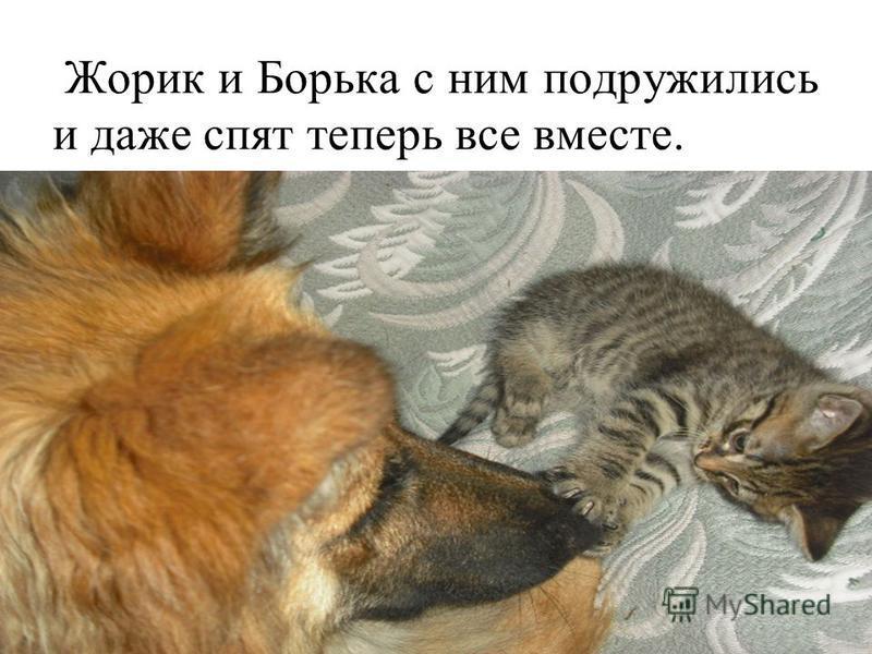 Жорик и Борька с ним подружились и даже спят теперь все вместе.