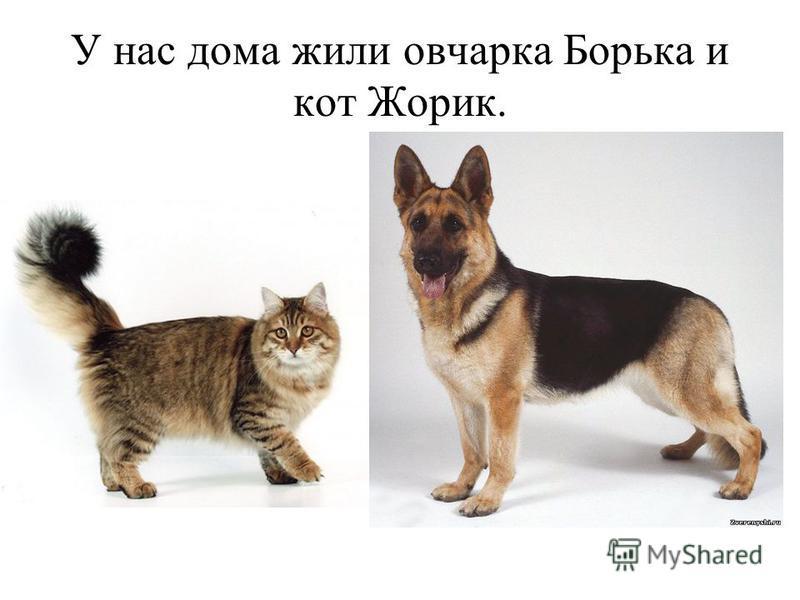 У нас дома жили овчарка Борька и кот Жорик.