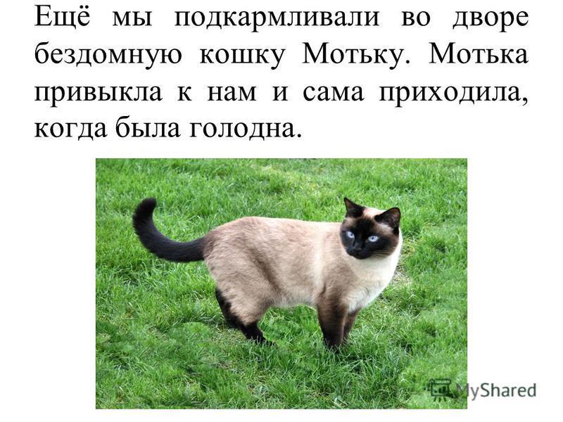 Ещё мы подкармливали во дворе бездомную кошку Мотьку. Мотька привыкла к нам и сама приходила, когда была голодна.
