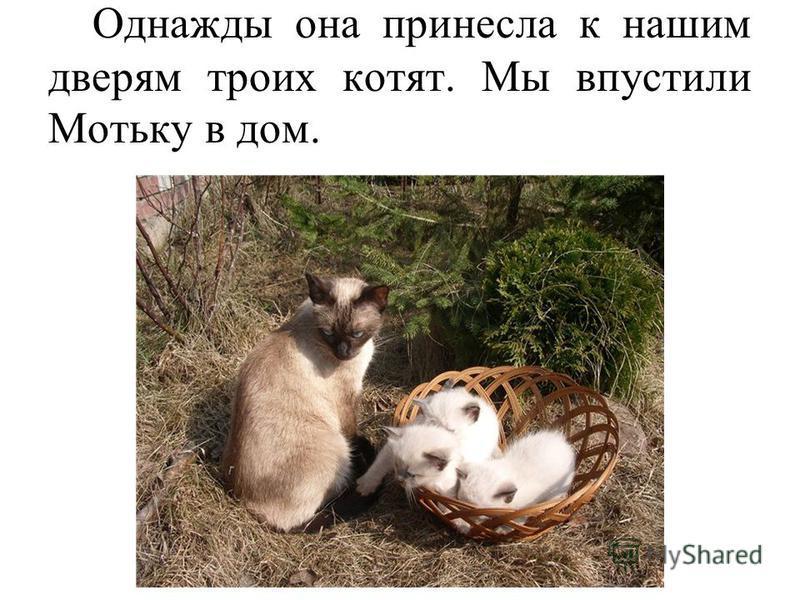 Однажды она принесла к нашим дверям троих котят. Мы впустили Мотьку в дом.