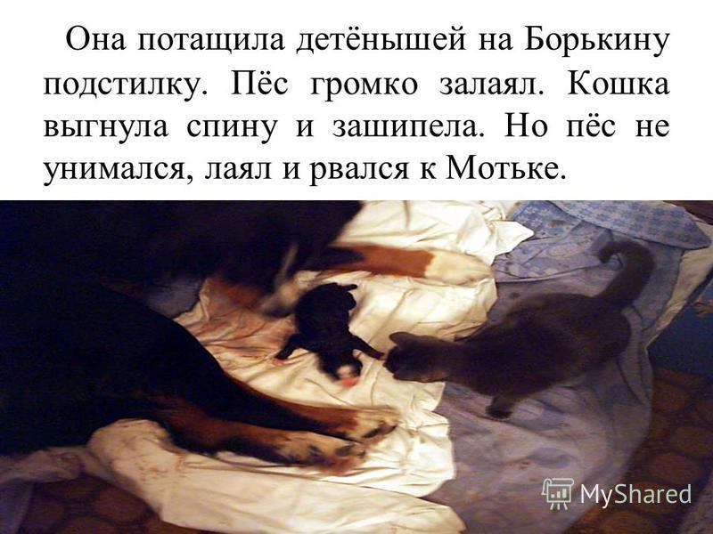 Она потащила детёнышей на Борькину подстилку. Пёс громко залаял. Кошка выгнула спину и зашипела. Но пёс не унимался, лаял и рвался к Мотьке.