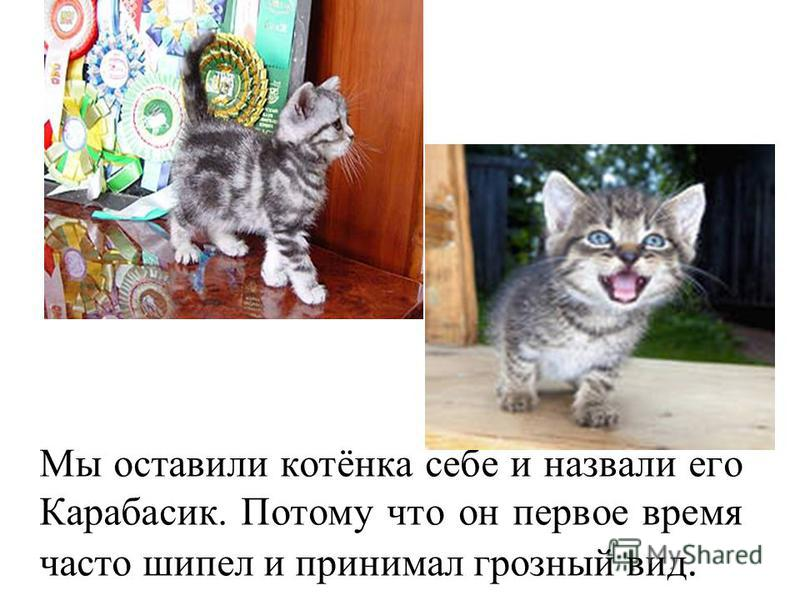 Мы оставили котёнка себе и назвали его Карабасик. Потому что он первое время часто шипел и принимал грозный вид.