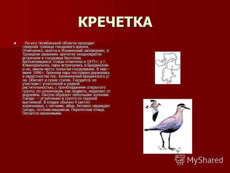 КРЕЧЕТКА По югу Челябинской области проходит северная граница гнездового ареала. Отмечались залеты в Ильменский заповедник; в Троицком заказнике кречетку неоднократно встречали в гнездовых биотопах. Беспокоившиеся птицы отмечены в 1975 г. у г. Южноур