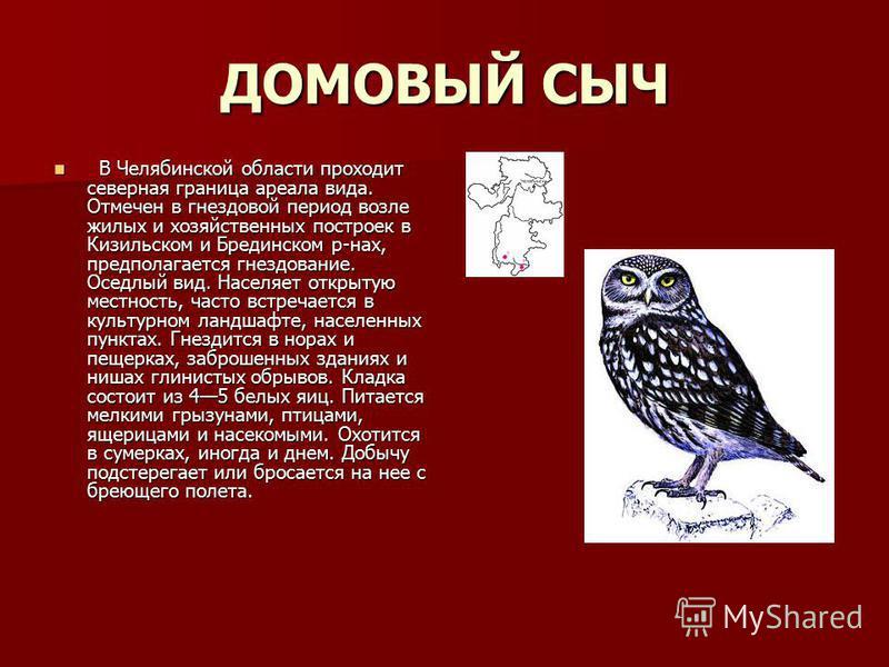 ДОМОВЫЙ СЫЧ В Челябинской области проходит северная граница ареала вида. Отмечен в гнездовой период возле жилых и хозяйственных построек в Кизильском и Брединском р-нах, предполагается гнездование. Оседлый вид. Населяет открытую местность, часто встр