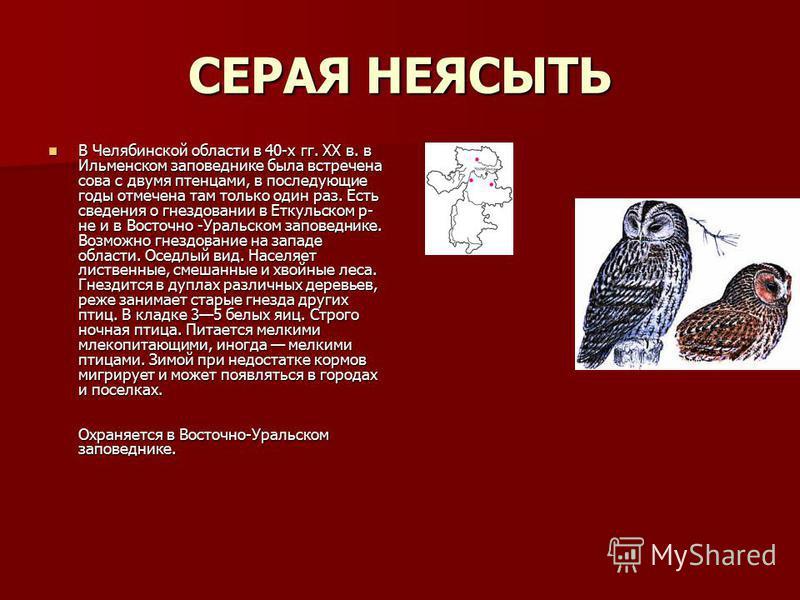 СЕРАЯ НЕЯСЫТЬ В Челябинской области в 40-х гг. XX в. в Ильменском заповеднике была встречена сова с двумя птенцами, в последующие годы отмечена там только один раз. Есть сведения о гнездовании в Еткульском р- не и в Восточно -Уральском заповеднике. В