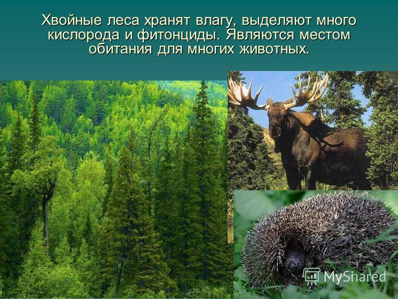 10 Хвойные леса хранят влагу, выделяют много кислорода и фитонциды. Являются местом обитания для многих животных.