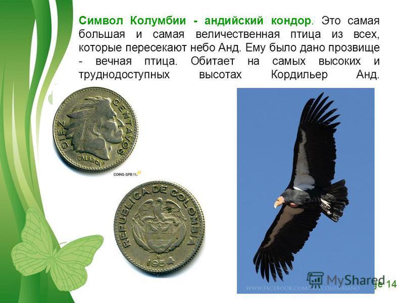 Free Powerpoint TemplatesPage 14 Символ Колумбии - андийский кондор. Это самая большая и самая величественная птица из всех, которые пересекают небо Анд. Ему было дано прозвище - вечная птица. Обитает на самых высоких и труднодоступных высотах Кордил