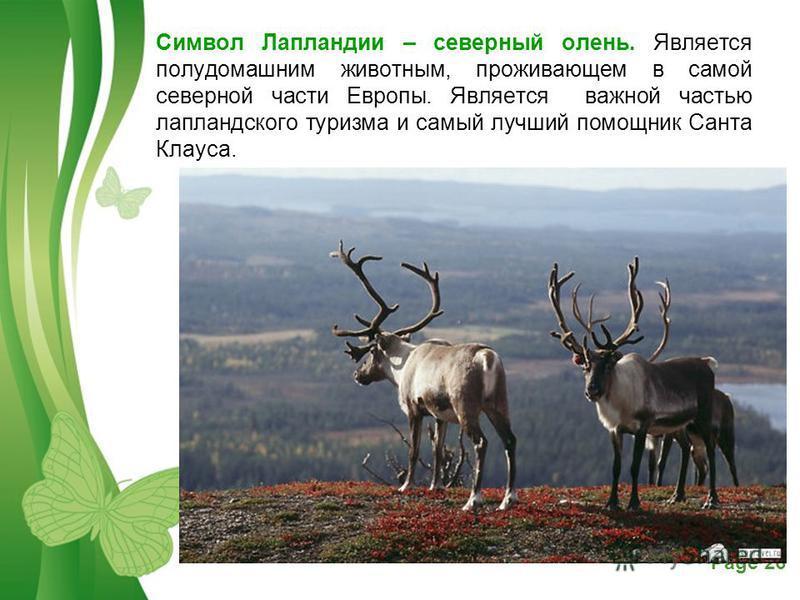 Free Powerpoint TemplatesPage 26 Символ Лапландии – северный олень. Является полудомашним животным, проживающем в самой северной части Европы. Является важной частью лапландского туризма и самый лучший помощник Санта Клауса.