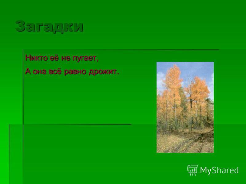 Загадки Русская красавица Стоит на поляне, В зелёной кофточке, В белом сарафане.