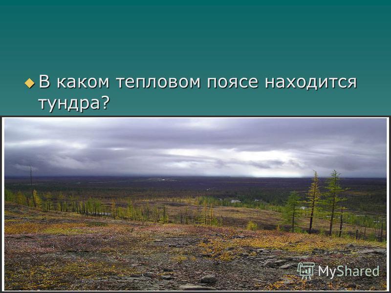 В каком тепловом поясе находится тундра? В каком тепловом поясе находится тундра?
