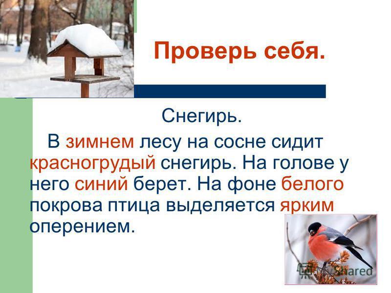 Проверь себя. Снегирь. В зимнем лесу на сосне сидит красногрудой снегирь. На голове у него синий берет. На фоне белого покрова птица выделяется ярким оперением.