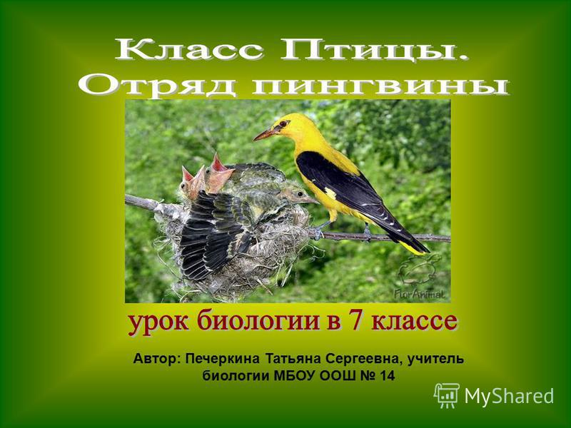 Автор: Печеркина Татьяна Сергеевна, учитель биологии МБОУ ООШ 14