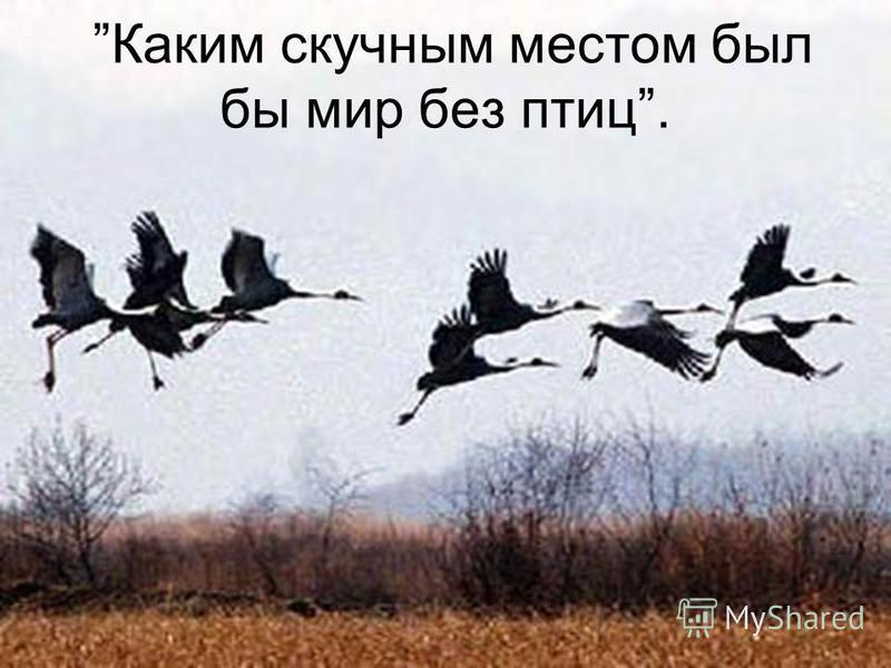 Каким скучным местом был бы мир без птиц.