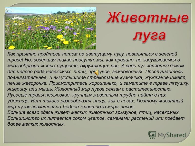 t Как приятно пройтись летом по цветущему лугу, поваляться в зеленой траве! Но, совершая такие прогулки, мы, как правило, не задумываемся о многообразии живых существ, окружающих нас. А ведь луг является домом для целого ряда насекомых, птиц, грызуно