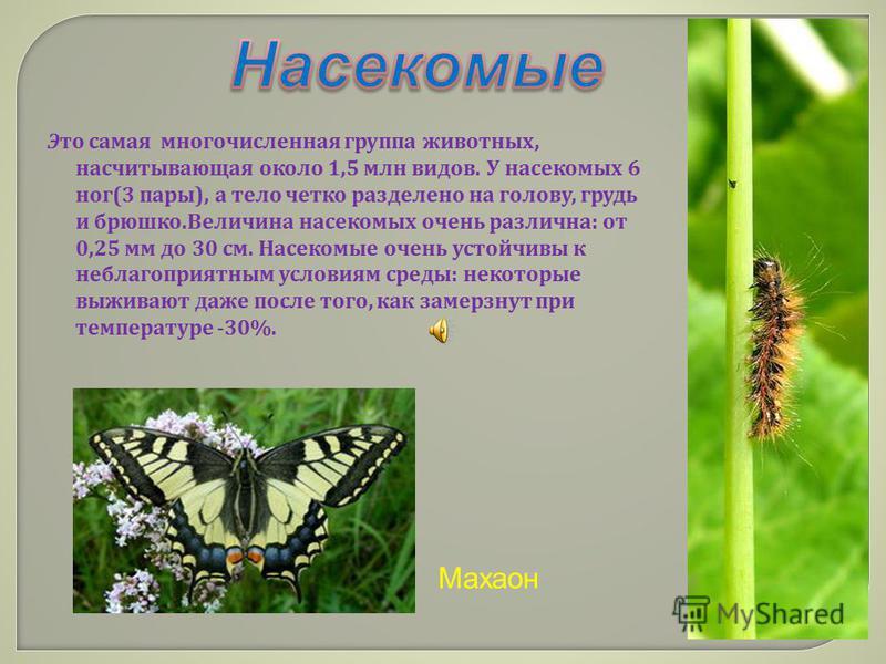 Это самая многочисленная группа животных, насчитывающая около 1,5 млн видов. У насекомых 6 ног (3 пары ), а тело четко разделено на голову, грудь и брюшко. Величина насекомых очень различна : от 0,25 мм до 30 см. Насекомые очень устойчивы к неблагопр