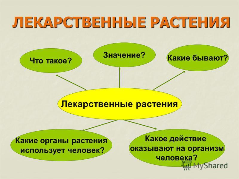 Лекарственные растения Что такое? Значение? Какие бывают? Какие органы растения использует человек? Какое действие оказывают на организм человека? ЛЕКАРСТВЕННЫЕ РАСТЕНИЯ