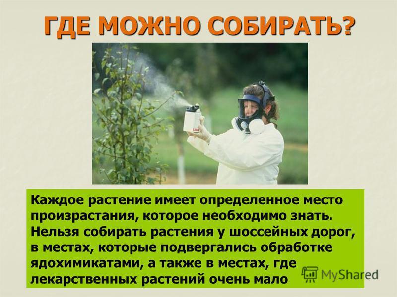 ГДЕ МОЖНО СОБИРАТЬ? Каждое растение имеет определенное место произрастания, которое необходимо знать. Нельзя собирать растения у шоссейных дорог, в местах, которые подвергались обработке ядохимикатами, а также в местах, где лекарственных растений оче