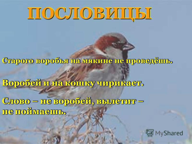 Слово – не воробей, вылетит – не поймаешь. Слово – не воробей, вылетит – не поймаешь. Воробей и на кошку чирикает. Старого воробья на мякине не проведёшь. ПОСЛОВИЦЫПОСЛОВИЦЫ