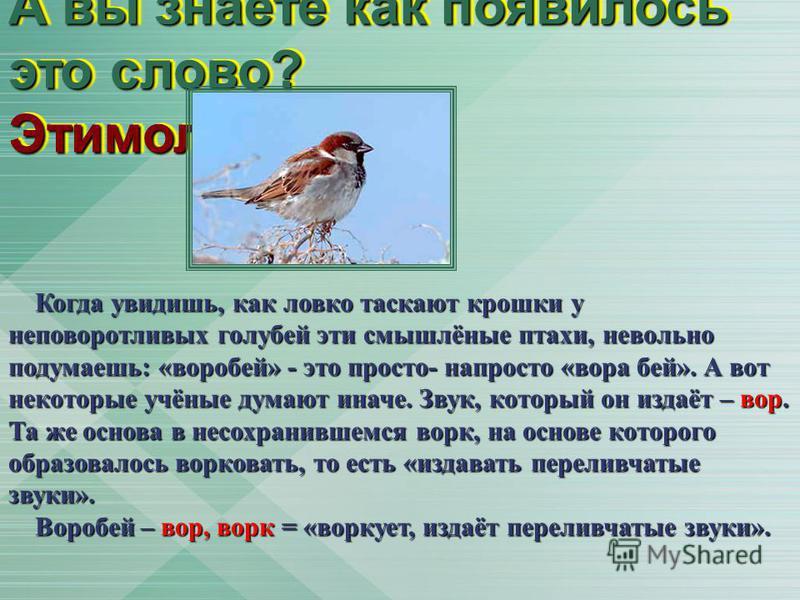 А вы знаете как появилось это слово? Этимология Когда увидишь, как ловко таскают крошки у неповоротливых голубей эти смышлёные птахи, невольно подумаешь: «воробей» - это просто- напросто «вора бей». А вот некоторые учёные думают иначе. Звук, который