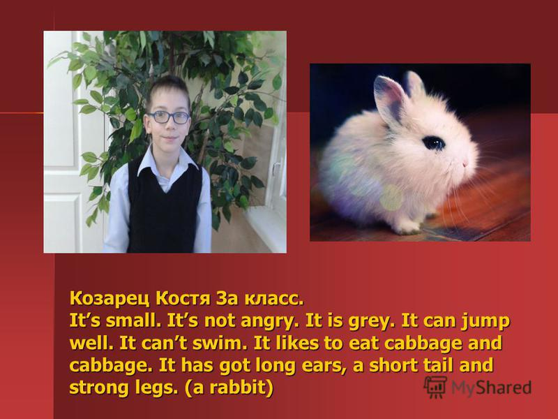 Козарец Костя 3а класс. Its small. Its not angry. It is grey. It can jump well. It cant swim. It likes to eat cabbage and cabbage. It has got long ears, a short tail and strong legs. (a rabbit)